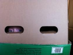 Child hiding in box - irony